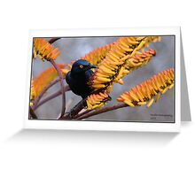 Glossy starling Greeting Card