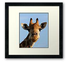 Giraffe at work! Framed Print