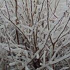 Frozen Tree iPhone Cover by Sarah Tweedie
