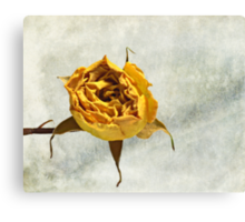 Withered Rose #2 Canvas Print
