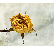 Withered Rose #2 Photographic Print