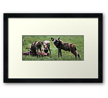 Hungry! Wild or not! Framed Print
