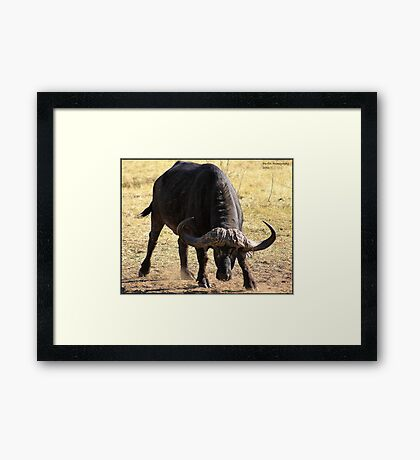 Unhappy Buffalo Framed Print