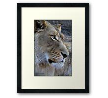 Lion glance! Framed Print