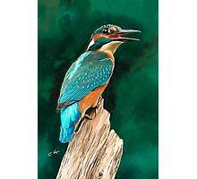 Kingfisher Photographic Print