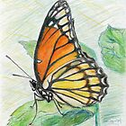 The Butterfly by Kashmere1646