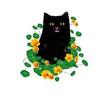 Black cat with nasturtiums Photographic Print