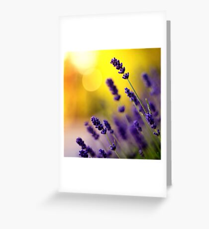 Evening story Greeting Card