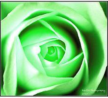 green rose Photographic Print