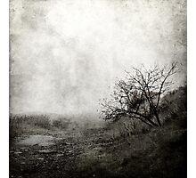 Misty tree Photographic Print