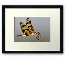 Holding On Tightly Framed Print