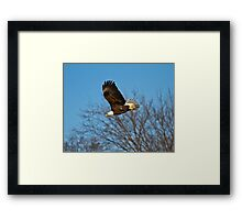 Coming For The Kill Framed Print