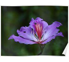 The Beauty Is Open - La Belleza Esta Abierta Poster