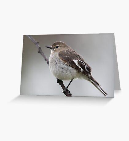 Flame Robin - Female Greeting Card