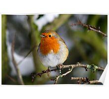 Cheeky Robin Poster