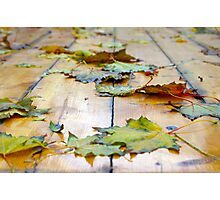 Selective focus on the autumn fallen maple leaves Photographic Print