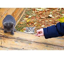 Two homeless kitten playing with a stick Photographic Print