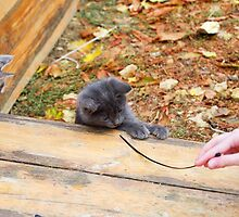 Two pretty little kitten played with a stick in the autumn park by vladromensky