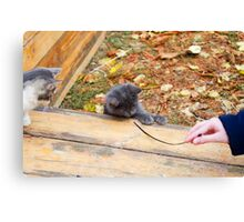 Two pretty little kitten played with a stick in the autumn park Canvas Print