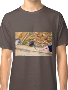 Two pretty little kitten played with a stick in the autumn park Classic T-Shirt