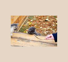 Two pretty little kitten played with a stick in the autumn park Unisex T-Shirt