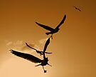 Seagulls Silhouettes by Leon Heyns