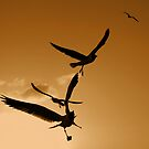 Seagulls Silhouettes by Leon Heyns