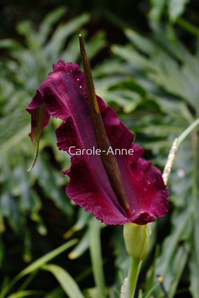 Dragon Lily: View #2 by Carole-Anne