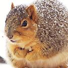 Squirrel In The Round by lorilee