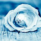 Blue Rose by Amanda Roberts