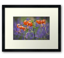 Lilies amid Purple Flowers Framed Print