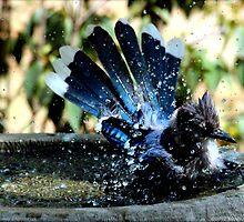 Blue Jay Bath by freevette