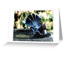 Blue Jay Bath Greeting Card