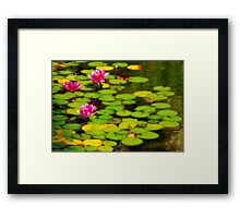 Water Lilies in Balboa Park Framed Print