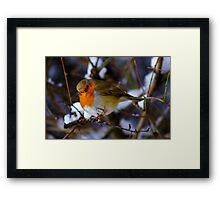 Cheeky Robin 2 Framed Print