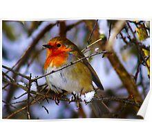 Cheeky Robin 3 Poster
