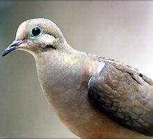 Mourning Dove by freevette