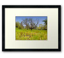Maudslay Tree Framed Print