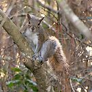 A Cute Squirrel by MichelleR