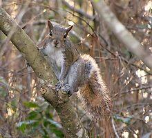 A Cute Squirrel by MichelleR