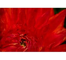 Aflame Photographic Print