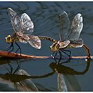 Dragonfly Dance by Barb Leopold