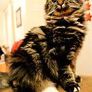 Kitten Quincy by evergleammm