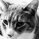 Cat Face II by evergleammm