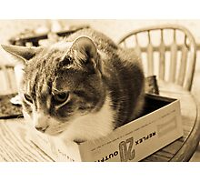 Cat in Box Photographic Print