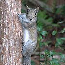 Sweet Squirrel by MichelleR