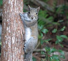 Sweet Squirrel by MichelleR