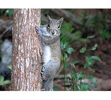 Sweet Squirrel Photographic Print
