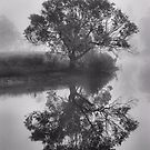 Moody - Bedlam Creek NSW Australia by Bev Woodman