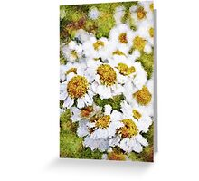 White Daisy's in the summer sun  Greeting Card